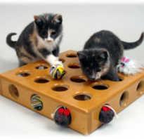 Как сделать прикольные игрушки для кота. Игровой полигон для питомца. Почему кошкам необходимы игрушки