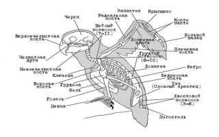 Есть ли ресницы у птиц. Интересные факты о ресницах. Визуальное представление строения волнистого попугая на фото