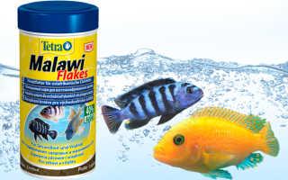 Аквариумные рыбки уход за ними. Какая должна быть вода в аквариуме. Полосатая семья: особенности размножения зебры