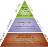 Классификация ароматов в современной парфюмерии. Классификация ароматов: как выбрать идеальный парфюм