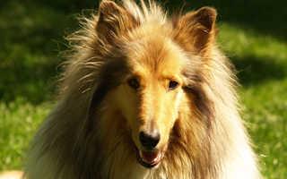 Препараты лечения собак от укуса клеща. Возможные последствия укуса. При обращении в клинику ветврач обращает внимание