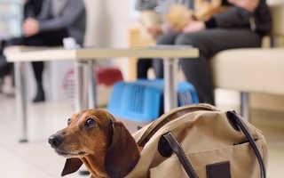 Запор у собаки лечение в домашних. Возможные признаки запора у собаки. Что считать запором у собаки