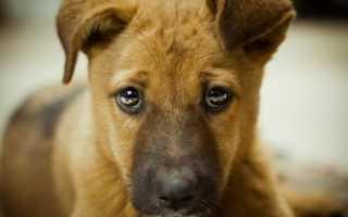 Как выявить причину поведения и отучить собаку писать дома. Как отучить собаку писать дома и приучить делать это на улице
