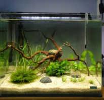 Как правильно запустить рыбок в новый аквариум. Как правильно провести запуск аквариума в первый раз