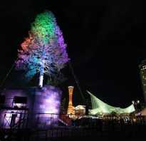 В японии зажглась самая высокая в мире живая рождественская ель. Самые сумасшедшие новогодние елки в мире