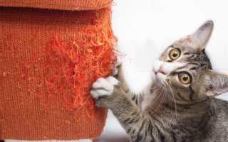 Почему кошки и коты мурлыкают, когда их гладишь и что это значит. Почему кошки мурлыкают, когда их гладишь