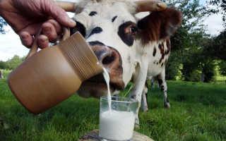 Когда можно (и можно ли) давать коровье молоко грудному ребенку. Когда можно давать ребенку детское молоко
