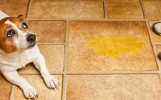 Как отучить собаку гадить в квартире. Как приучить к улице взрослую собаку. Приведём основные правила