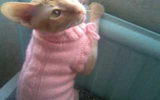 Как сшить одежду для кота своими руками. Как сделать одежду для кошки своими руками Вариант «Вязаная шапка, не ушанка»