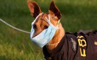 Вольерный кашель у собак: глубокое исследование проблемы. Основные признаки и пути лечения вольерного кашля у собак