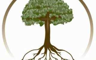 Программа для создания древа жизни. Как создать генеалогическое древо. Программа для построения генеалогического древа