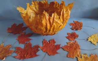 Ваза обклеенная листьями. Как сделать вазу из листьев своими руками. Как сделать скелетирование листьев