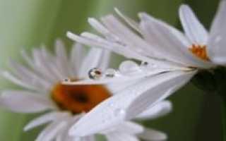 Дерево с белыми шапками цветов. Белые цветы в саду: описание, название и фото идеи красивого оформления