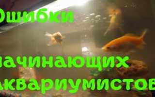 Инструкция как ухаживать за аквариумными рыбками. Перевозка аквариумных рыбок. Что понадобится начинающему аквариумисту