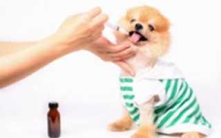 Правильная дегельминтизация собак или как глистогонить собаку. Препараты чтобы проглистогонить человека