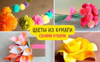 Огромные цветы из цветной бумаги. Как сделать цветок из бумаги своими руками легко и быстро: разные размеры