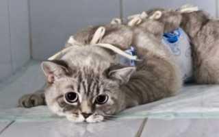 Кастрация и стерилизация животных. Чем отличается стерилизация от кастрации зачем нужна кастрация котов и кошек
