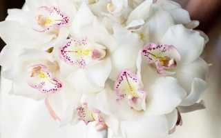 Прекрасный букет роз. Красивые, оригинальные и необычные букеты и композиции из живых цветов. Из полевых цветов
