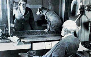 Эксперименты академика Павлова: самые шокирующие факты. Подробное описание эксперимента с собакой павлова и что это такое