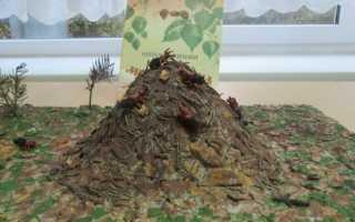 Муравей своими руками для детей. Мастер-класс по изготовлению макета «Муравейник. Как сделать муравья