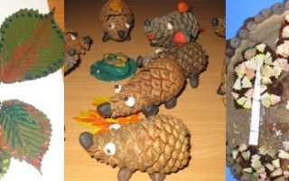 Поделки из природных материалов для детей. Поделки из природного материала своими руками в школу и в детский сад: фото