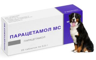 Можно ли давать парацетамол собаке? Опасная для здоровья таблетка. Высокая температура у собаки, причины, как помочь