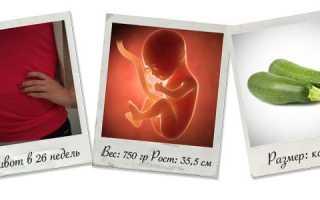 Беременность 25 26 недель что надо делать. Возможные эмоциональные переживания. Что происходит с малышом
