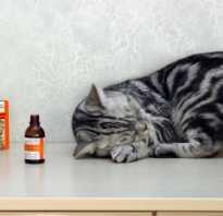 Почему коты любят валерьянку и как растение действует на кошачий организм? Почему все кошки любят валерьянку