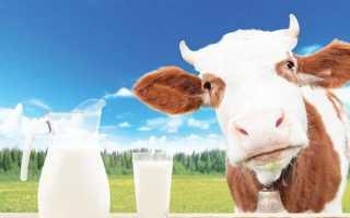 Когда можно начинать давать коровье молоко грудничку? Коровье молоко: можно ли его детям, плюсы и минусы продукта