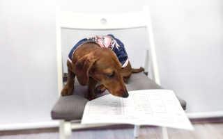 Где в родословной собаки указаны родители. «Удостоверение личности» собаки: как владельцу подготовить пакет документов