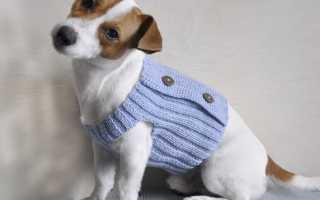Вязаная одежда для маленьких собак крючком. Мастер-класс по вязанию свитера для маленькой собачки. Материалы и инструменты