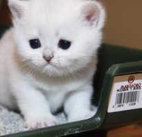 Какой лоток купить для кота. Основные виды и критерии выбора лотка для кошки. Основные правила выбора